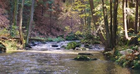 Богемия : Mountain wild river Doubrava in Czech Republic. Valley in beautiful autumn fall colors. Picturesque landscape. Стоковые видеозаписи