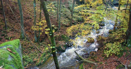 liken : Mountain wild river Doubrava in Czech Republic. Valley in beautiful autumn fall colors. Picturesque landscape. Stok Video