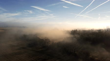 söğüt : Aerial misty morning landscape with sunlight over tree in countryside Stok Video