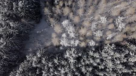 looking down : Flying over the snowy forest, top aerial view of winter landscape