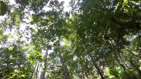 fish eye : Ground view of tree tops in the rainforest. Tangkoko Nature Reserve in North Sulawesi, Indonesia wilderness