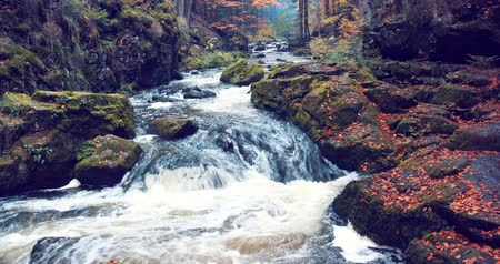 autumn leaves : Mountain wild river Doubrava in Czech Republic. Valley in beautiful autumn fall colors. Landscape. Stock Footage