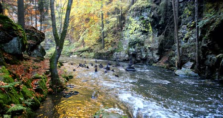 Mountain wild river Doubrava in Czech Republic. Valley in beautiful autumn fall colors. Landscape. Стоковые видеозаписи