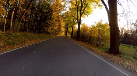 přirozeně : car drive in autumn landscape with sunny day. Countryside road. Fall concept