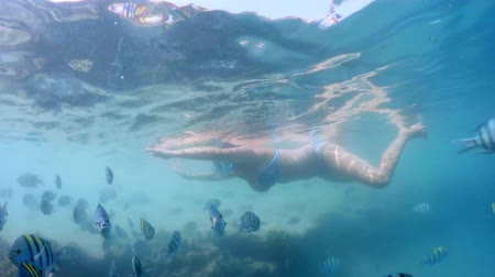 waterline : Woman snorkel swimming in the tropical tropics of a tropical paradise with a view of tropical red sea. Marsa alam, Egypt. Summer holiday vacation concept Stock Footage