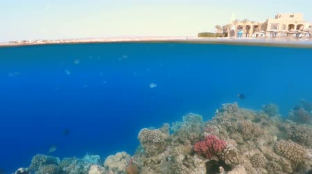 waterline : Underwater surface split view in the tropics paradise with fish and coral reef, above waterline view of paradise beach with parasols. Egypt Marsa Alam vacation concept. split screen under and above water.