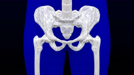 Healthy bone and osteoporosis bone. Loopable. Two luma matte (Skeleton and Body). 3D rendering. Vídeos