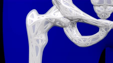 humanóide : Healthy bone and osteoporosis bone. Loopable. Two luma matte (Skeleton and Body). 3D rendering. Stock Footage