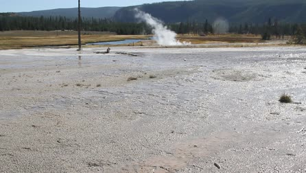 erupt : Geysers in yellowstone