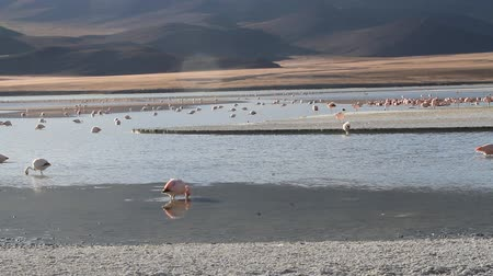 flaming : Flamingos in lake