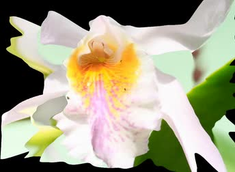 estame : Flowers Stock Footage