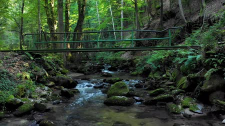 beatiful : Mountain river flowing over rocks and boulders in forest, Bistriski Vintgar gorge on Pohorje mountain, Slovenia, hiking and outdoor tourism landmark, woman running across bridge.