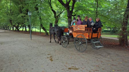 Slovenska Bistrica, Slovenia - Sept 9 2019: People ride a horse drawn carriage in public park. Traditional horse rides are upheld by the local tourist association of Slovenska Bistrica, Slovenia Стоковые видеозаписи