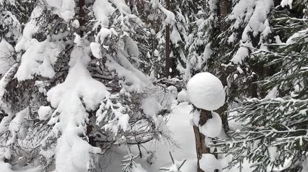 Falling snow in a winter park with snow covered trees. Winter forest walk. Stock mozgókép