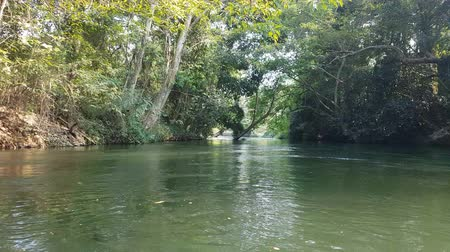 pontão : 4K footage view from boat trip along the river with tropical rain forest side view
