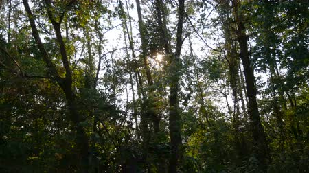 forrado : Footage from driving car down a rural road lined with trees forest. The sun shines through the wood, running along the way follow to the car.
