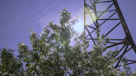 seeding : Dolly shot of the apple tree blossoming. Stock Footage
