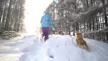 сугроб : Spectacular Slow Motion close up to the woman and a dog run. Legs largely.Golden retriever.