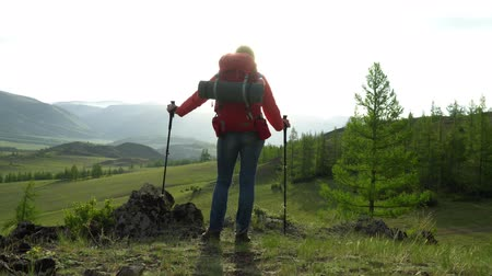 wet t shirt : The woman with a red backpack goes up green a grief. View of snow mountains. Morning sun. The woman in hands has sticks for walking. Altai. Stock Footage