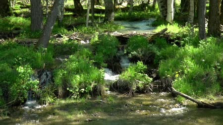 regenjas : The woman the traveler with a red backpack looks at a mountain stream. Clear water.