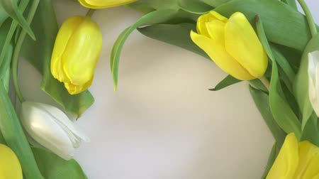 arranging : Tulips rotate. Spring flowers.
