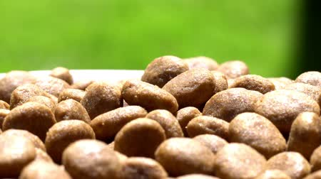 kesudió : Food for dogs. Dry food. Rotation. Close up.