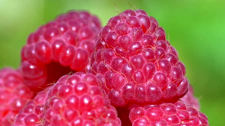Raspberries super close up 4K stock footage. Raspberries in macro close up with a sliding camera move.Movement in a circle.