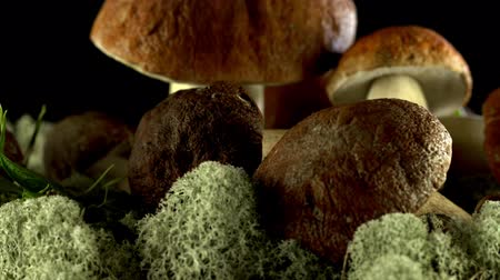 havlama : Rotates basket with porcini mushrooms. Bolete mushroom. Collection of Cep. Edible mushrooms. Large Porcini Mushrooms. Stok Video