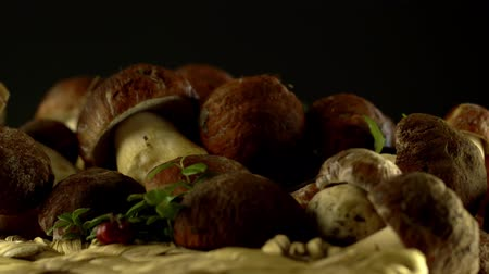 harvesting : Rotates basket with porcini mushrooms. Bolete mushroom. Collection of Cep. Edible mushrooms. Large Porcini Mushrooms. Stock Footage
