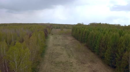 бронирование : Aerial drone shot over the north european forest. Shot in 4K (UHD).