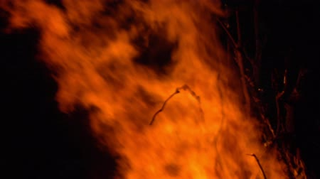tűzifa : Burning fire. Bonfire. Closeup of flames burning on black background, slow motion. Stock mozgókép