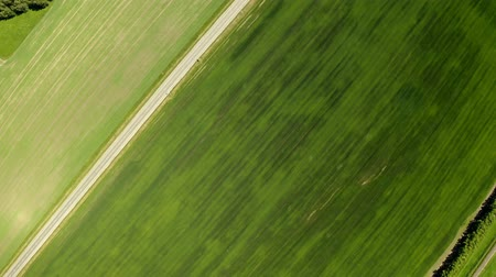 soya : An aerial shot of soybean field ripening at spring season, agricultural landscape
