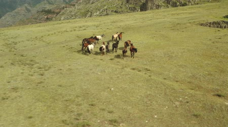 回転木馬 : Wild Horses Running. Herd of horses running on the steppes in the background mountain. Sunset. 動画素材