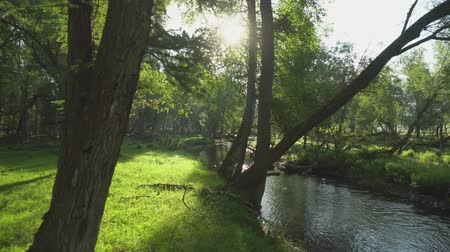 magnífico : A relaxing shot of a stream running along the forest landscape with sun rays beaming through the trees