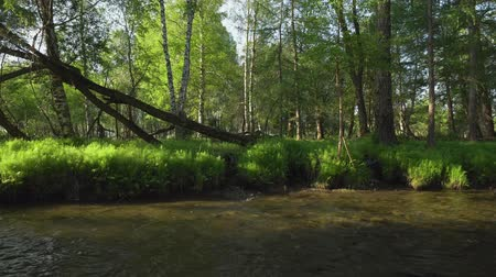 нетронутый : A relaxing shot of a stream running along the forest landscape with sun rays beaming through the trees