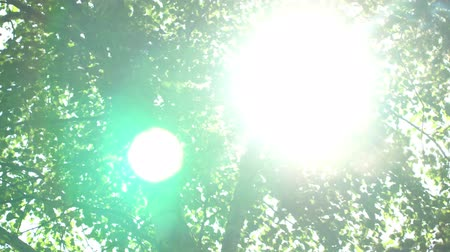 нетронутый : Looking up in forest, POV through tops of trees, sun shines through foliage