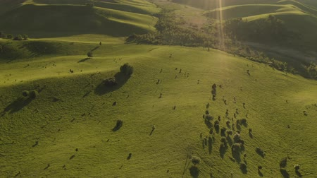 colômbia : Aerial Drone Footage View: Flying over spring mountains, hills and meadows with pine forests in sun soft light. Fly out. Europe. Beautiful landscape