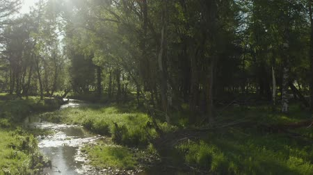 canadense : Beautiful aerial shot of a stream running along the forest landscape with sun rays beaming through the trees Stock Footage