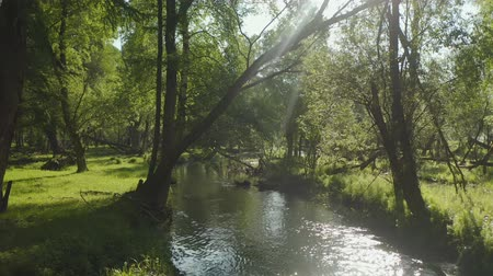 pristine : Beautiful aerial shot of a stream running along the forest landscape with sun rays beaming through the trees Stock Footage