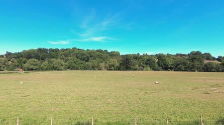 apito : The view from a train as it passes through farmland and the beautiful North Yorkshire countryside. Stock Footage