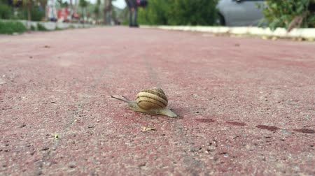 ползком : Snail Crawling on Sidewalk Стоковые видеозаписи
