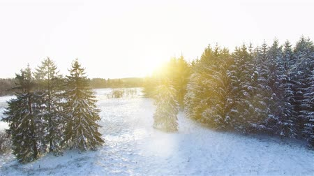 basit : Aerial 4K - Ultra HD: Birds eye view on beautiful silent forrest landscape in snow winter with sun light and awesome lens flares.