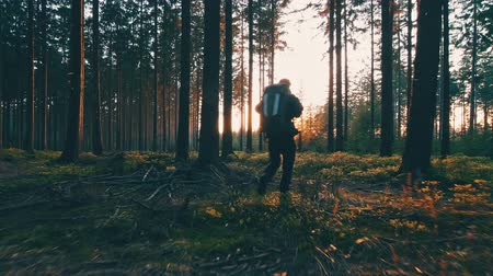 ботинок : Hiker hiking in forest at sunset. hikers enjoying the awesome view at sunset in a beautiful German forest Black Forest landscape