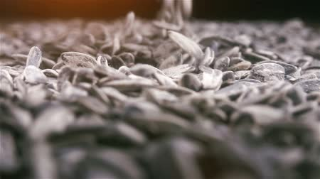 Further sunflower seeds drops over heap of seeds in slow motion and close up.