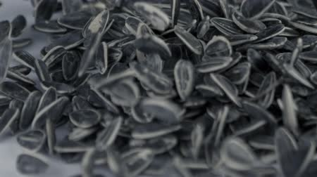 girassóis : sunflower seeds