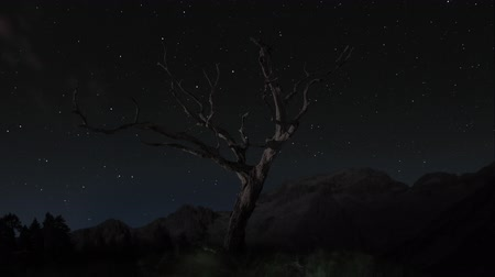 estrela : tree with stars time-lapse Vídeos