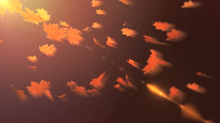 folhas : falling maple leaves Stock Footage