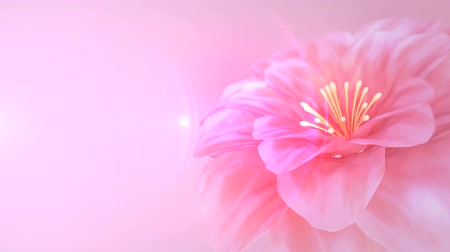flower : blooming pink flower Stock Footage