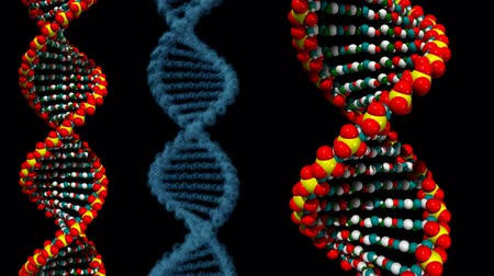 medicals : DNA helix rotation. Different sizes and colours. Loop. Alpha