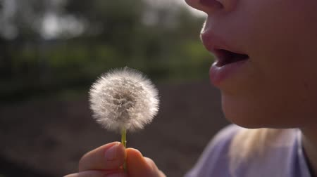 yumuşaklık : teen girl blowing white dandelion on sunny day